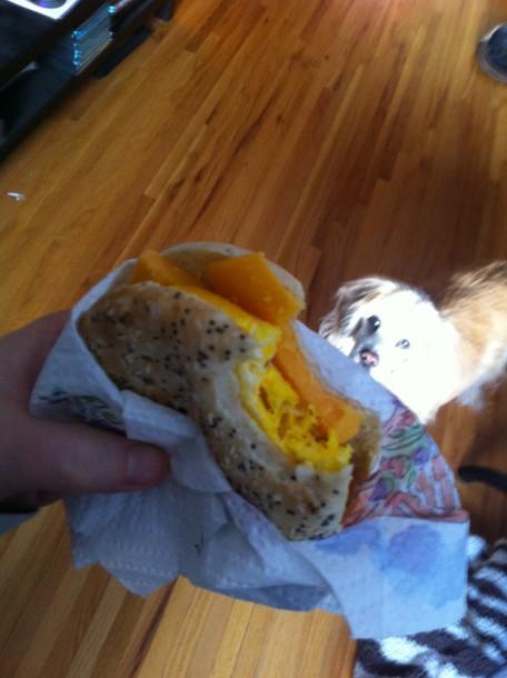 After taking a bite of my 90-second breakfast sandwich, Benny Bear appeared.