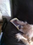 Benny Chewing ChewsBag
