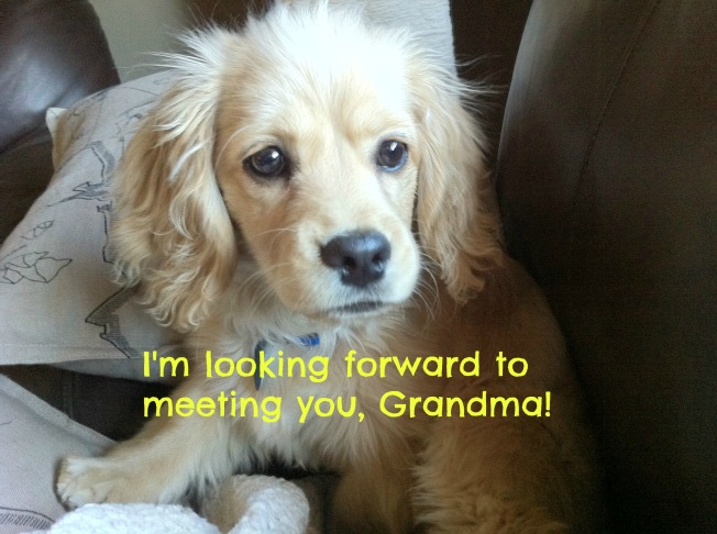 Shamrock grandma