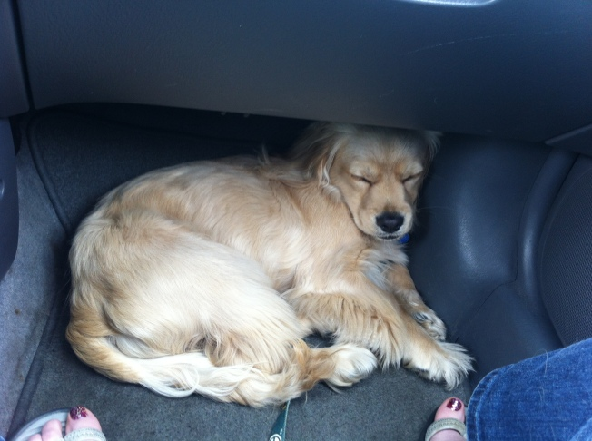 Sleepy Shamrock...